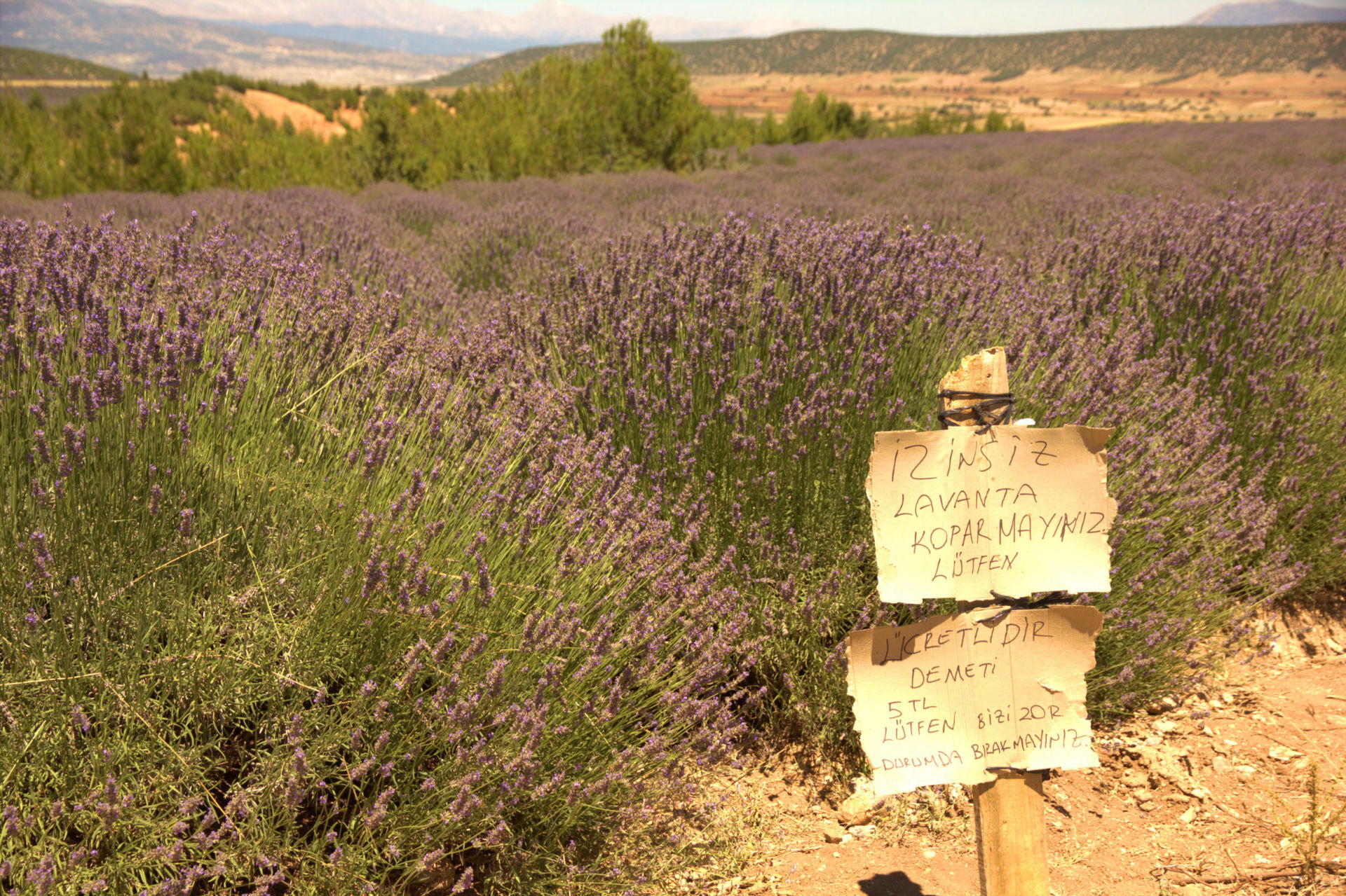 Lavender Fields and Insuyu Cave