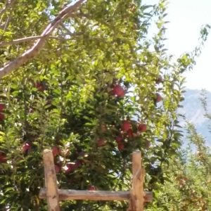 Vineyards-Elmali-Lykia-Wines-10
