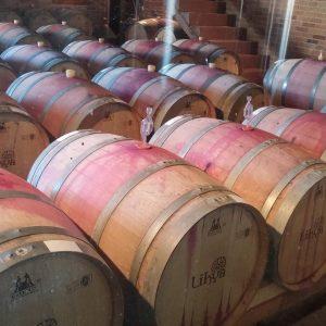 Vineyards-Elmali-Lykia-Wines-14