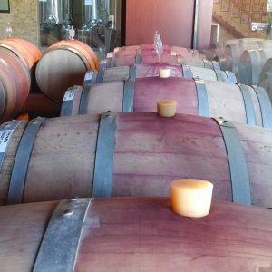 Vineyards-Elmali-Lykia-Wines-15