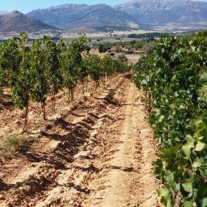 Vineyards-Elmali-Lykia-Wines-28