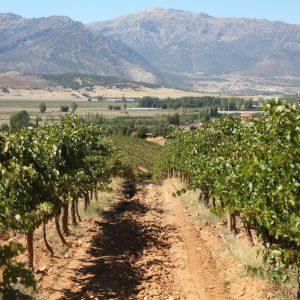 Vineyards-Elmali-Lykia-Wines-42