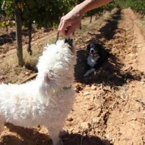 Vineyards-Elmali-Lykia-Wines-45