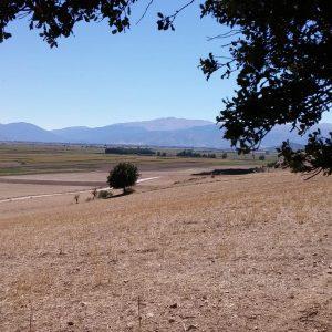 Vineyards-Elmali-Lykia-Wines-8